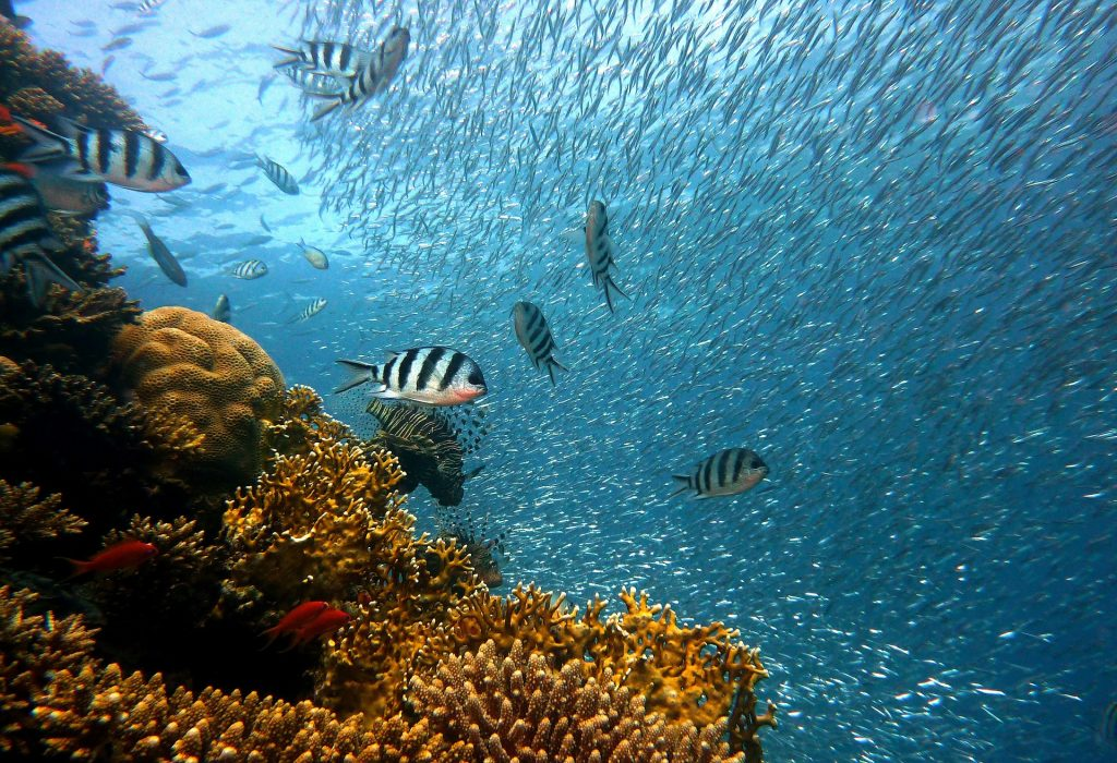 Cozumel My Cozumel diving image