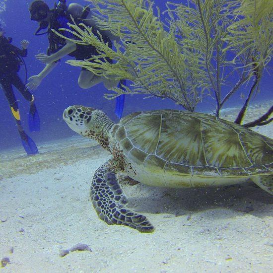Cozumel My Cozumel diving tips